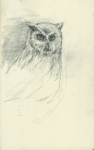 owl_north_birds